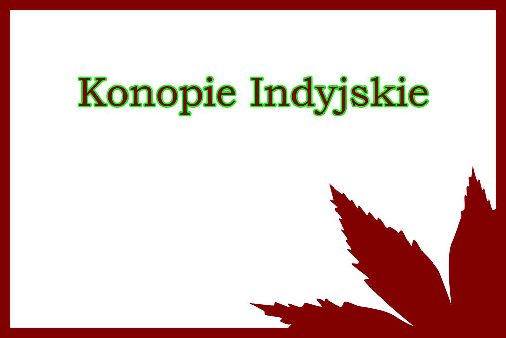 rośliny konopi indyjskich